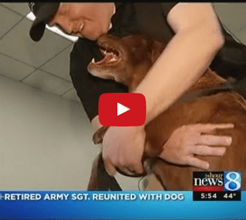 Military Dog and Retired Veteran Are Torn Apart – Two Years Later She Hears Him Calling Her Name
