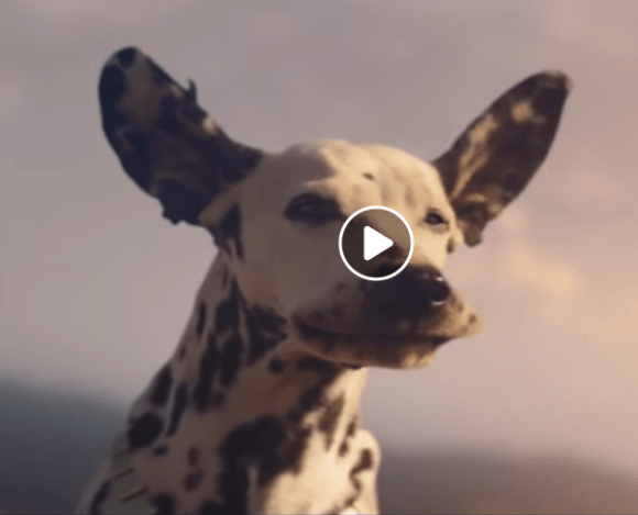 The 2019 Budweiser Superbowl Commercial Is Here!!