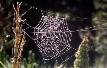 Orb spider web - NPS Photo - J Schmidt - 1977 - Wikipedia - Public Domain.