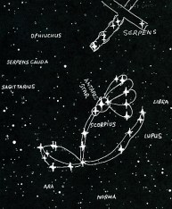 flower of the field constellation (fixed)