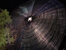 http://commons.wikimedia.org/wiki/File:SpiderWeb.jpg