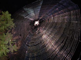http://commons.wikimedia.org/wiki/File:SpiderWeb.jpg