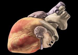 http://en.wikipedia.org/wiki/File:Heart_oblique_external.jpg