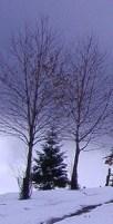 http://commons.wikimedia.org/wiki/File:Apple_tree_in_winter_Baztán.jpg