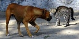 Cat and dog - Dont know whats comin - Wikimedia - Share-Alike License