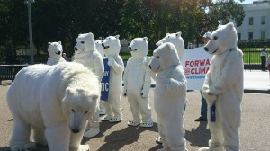 http://commons.wikimedia.org/wiki/File:Polar_bear_protest_(10032082375).jpg