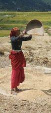 http://en.wikipedia.org/wiki/File:Vannage_du_riz,_Uttarakhand,_India.jpg
