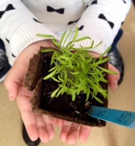 Hands-seedlings (1)