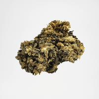Fleurs CBD Jack Diesel | The Hemp Corner