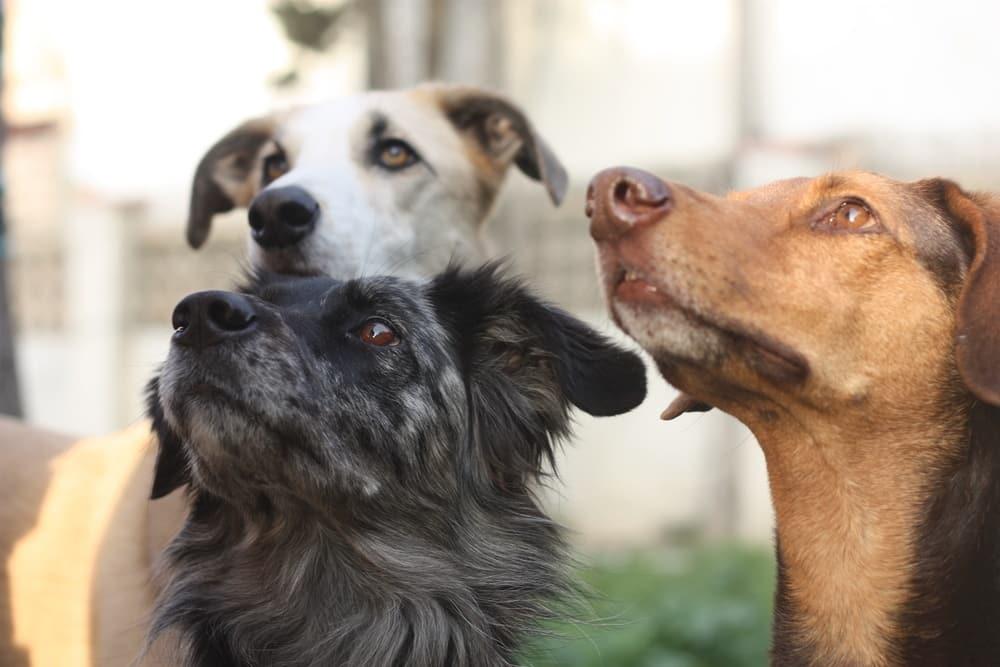 Thehempydog-nuestro-equipo