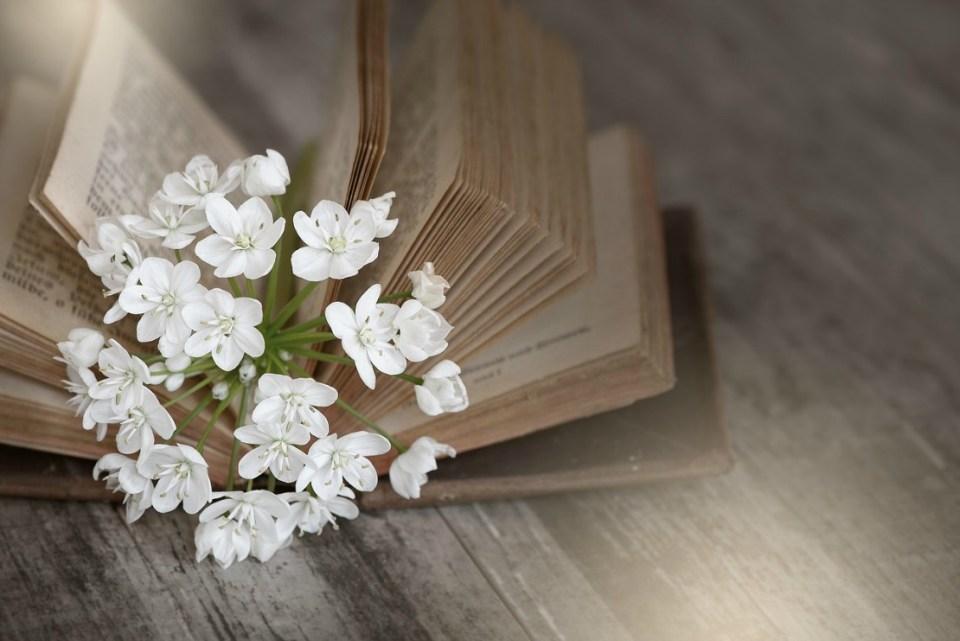 online herbal programs