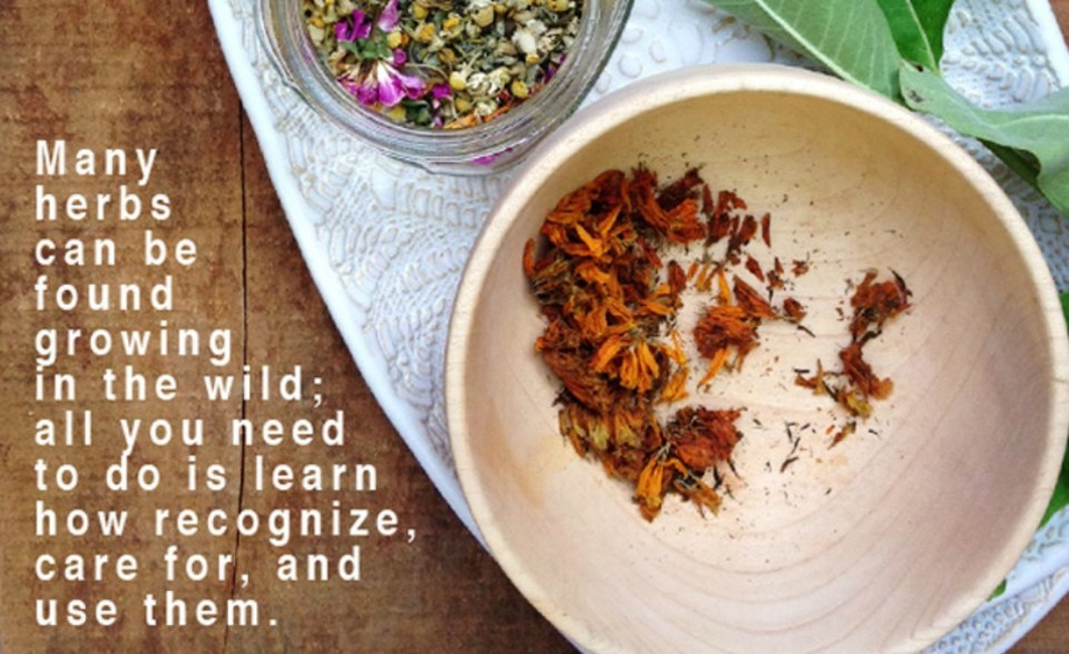 Nature-of-Herbalism-on-the-Herbal-Academy-blog