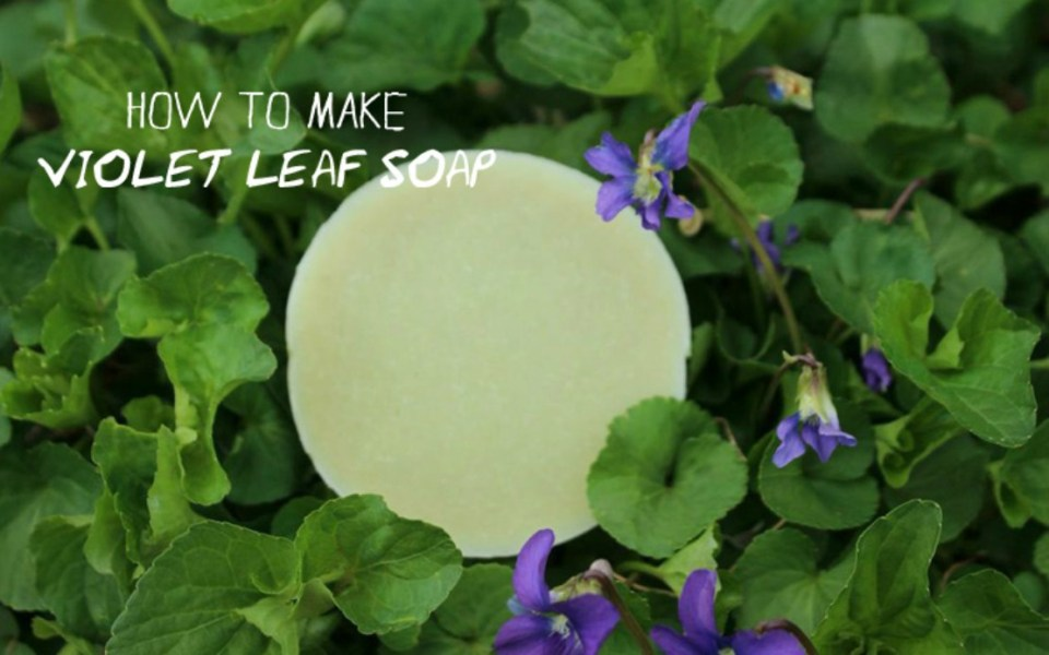 Violet-Leaf-Soap-recipe-Herbal-Academy-of-New-England