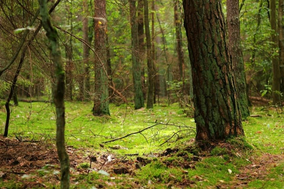 forest-public-domain-1024x682