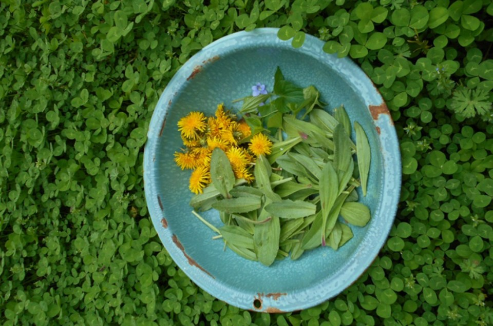 6 Spring Herbs You Can Forage Now | Herbal Academy | Foragers everywhere look forward to the first spring foliage that bursts from the earth. Here are 6 spring herbs you can forage now!