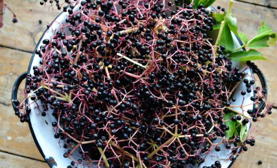 Elderberry-Cold-and-Flu-Elixer-by-the-Herbal-Academy-of-New-England