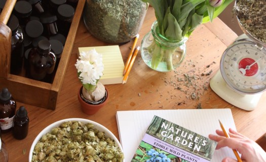 Becoming a clinical herbalist - The online Advanced Herbal Course at the Herbal Academy
