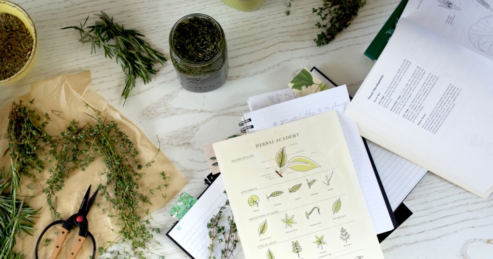 The Free Herbal Materia Medica Course - January Registration