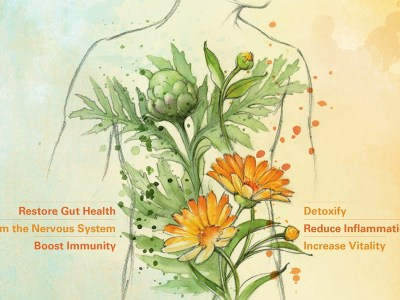 Giveaway: Body Into Balance | Herbal Academy | Win a copy of Maria Noël Groves's new book, Body Into Balance!