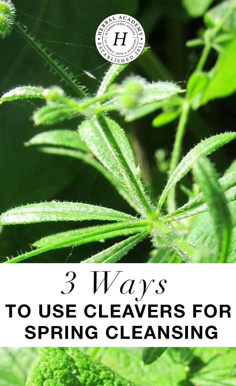 Cleavers for Spring Cleansing