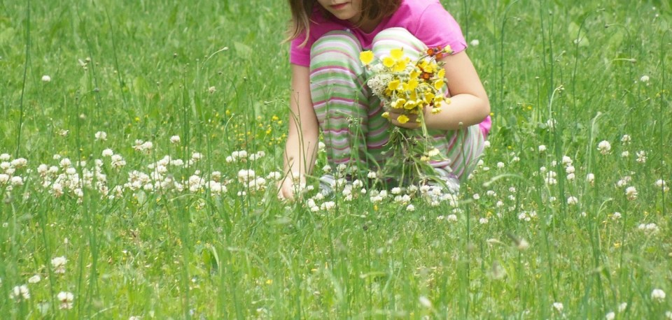 Family Wildcrafting (Family Herbal Summer Series: Part 3) | Herbal Academy | Join us on an herbal adventure as we discover the joys of family wildcrafting!