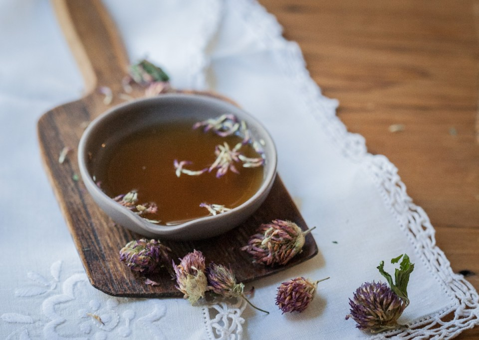 Is Red Clover Safe During Pregnancy and Breastfeeding? | Herbal Academy | Red clover is generally a safe herb to use, but is it safe during pregnancy and breastfeeding? Find out our opinion in today's post!