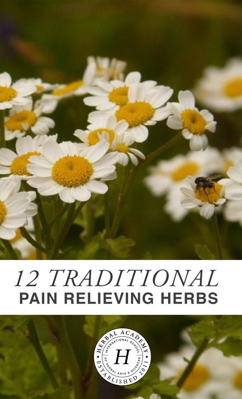 Pain Relieving Herbs