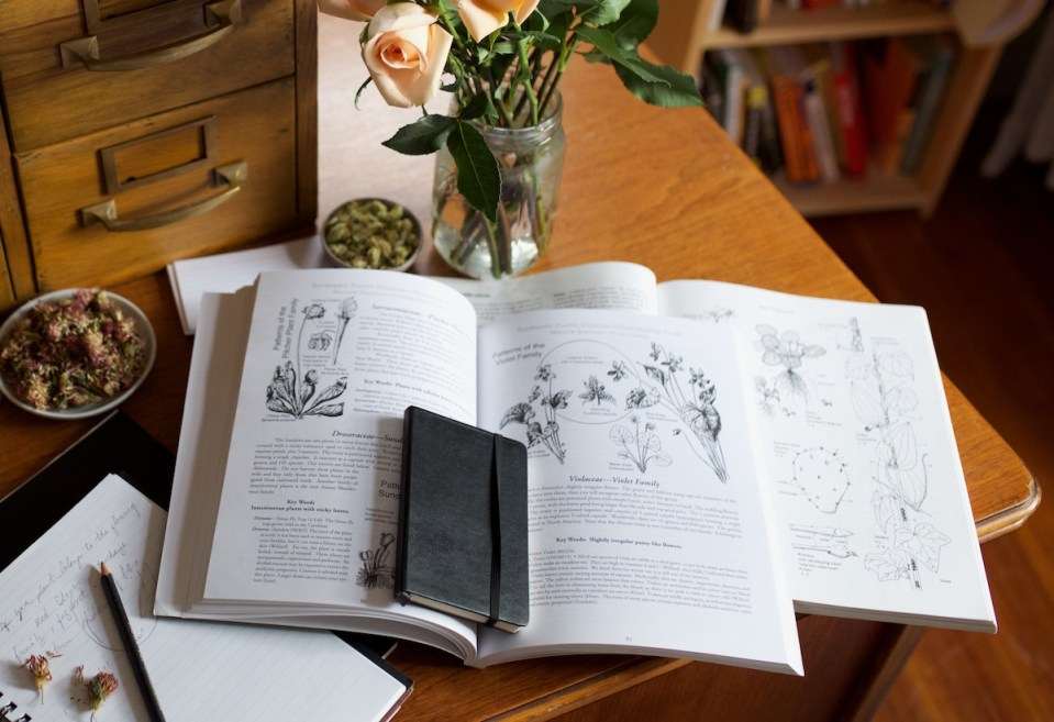 5 Foraging Guide Books To Help You Identify & Harvest Plants   Herbal Academy   Would you like to know more about identifying and harvesting plants? Here are 5 foraging guide books to get you started on your journey!