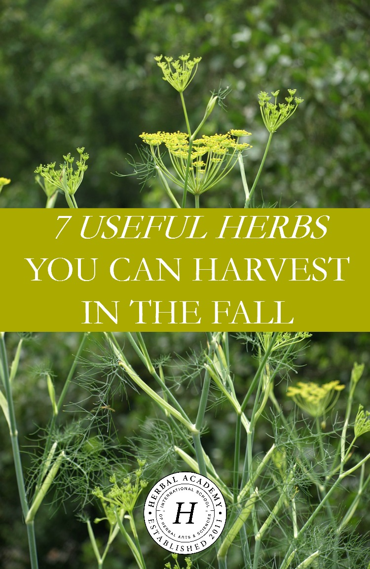 Harvesting Fall Herbs: 7 Useful Herbs To Get You Started