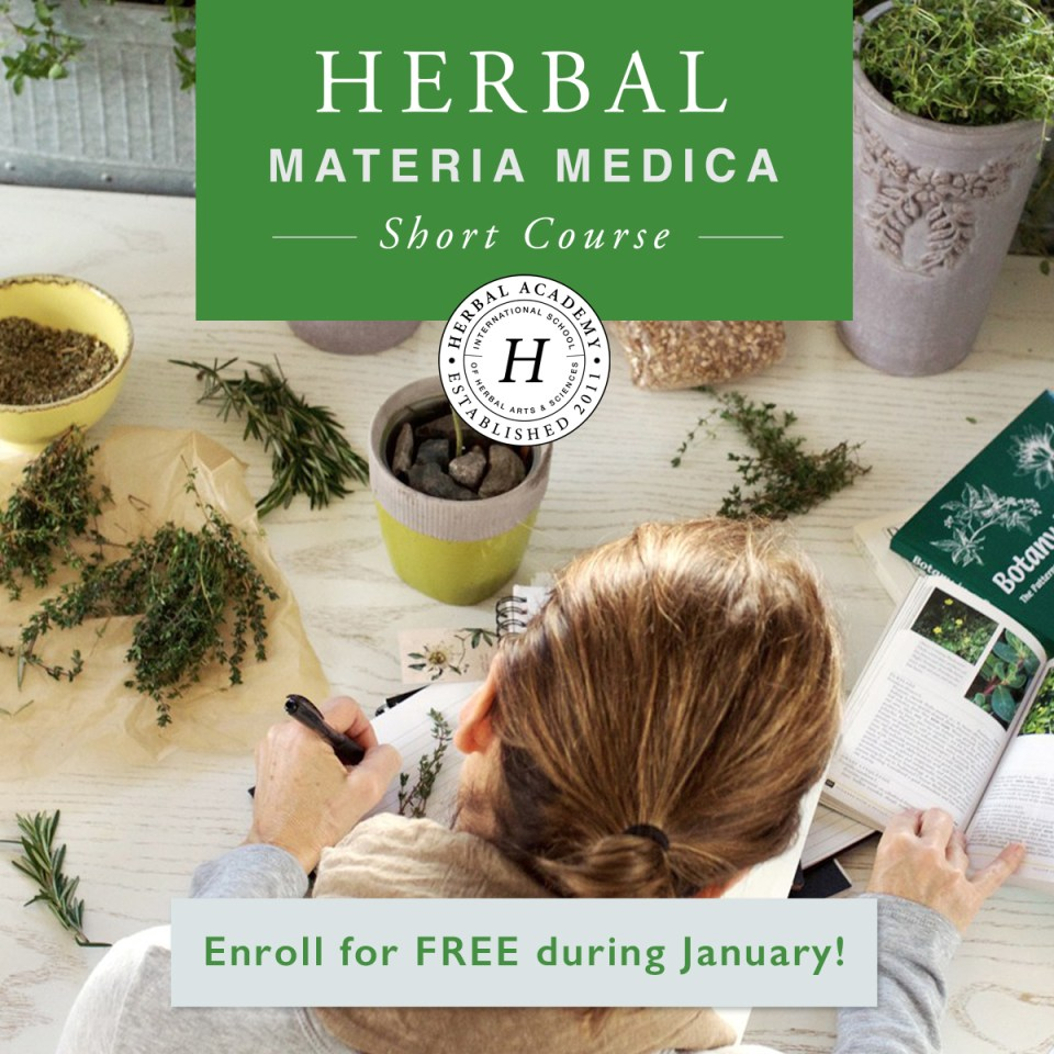 How To Create An Herbal Materia Medica (Free E-Course) | Herbal Academy | One part of learning to be an herbalist is learning about the herbs themselves. Our new Herbal Materia Medica Course can help make learning one herb at a time much easier. Check it out today!