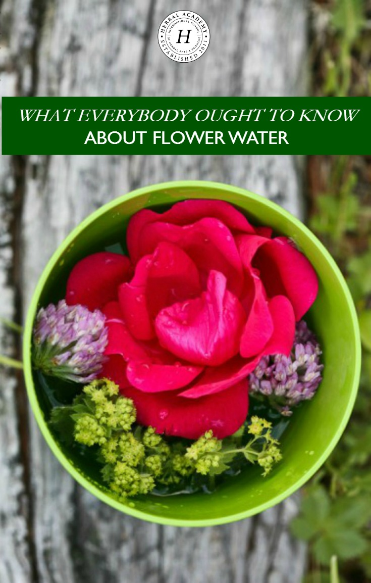 What Everybody Ought To Know About Flower Water | Herbal Academy |Do you know flower water is safer to use than essential oils and has a broad range of applications? Here's how to make it!