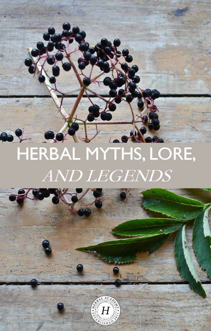Herbal Myths, Lore, and Legends | Herbal Academy | Here's an introduction to some of our favorite herbal myths, lore, and legends. Learn the legends of 7 herbs from cultures around the world!