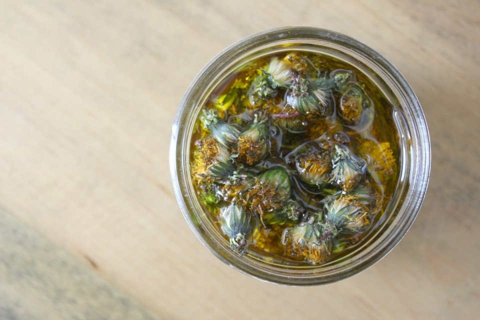 How To Make Fresh Dandelion Blossom Oil | Herbal Academy | Learn how to properly infuse fresh herbs with this fresh dandelion blossom oil tutorial!