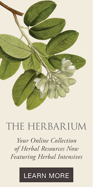 The Herbarium by the Herbal Academy