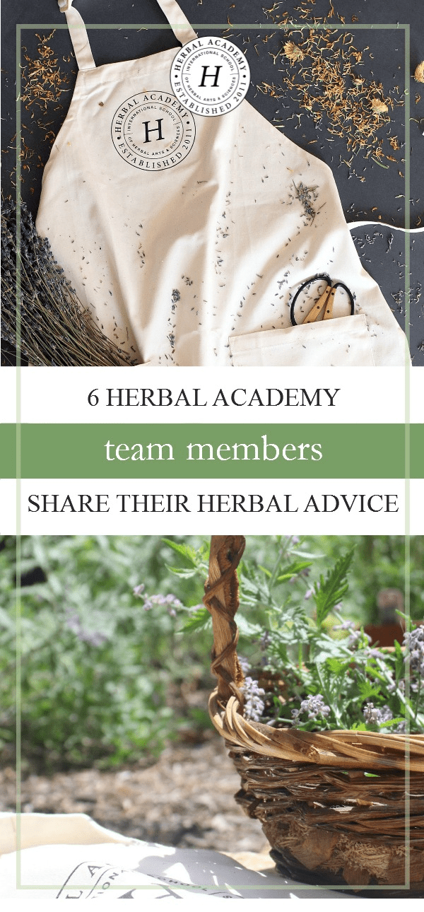 Herbal Q&A: 5 Herbal Academy Team Members Share Their Herbal Advice | Herbal Academy |Have you ever wanted to sit down with a group of herbalists and pick their brains? Today we have Herbal Academy team members sharing herbal advice with us!