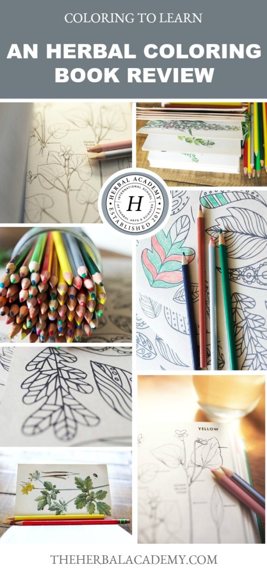Coloring to Learn: An Herbal Coloring Book Review   Herbal Academy   Have you considered learning herbalism through coloring? Here's a collection of coloring books to help any herbalist get to know herbs on a new level!