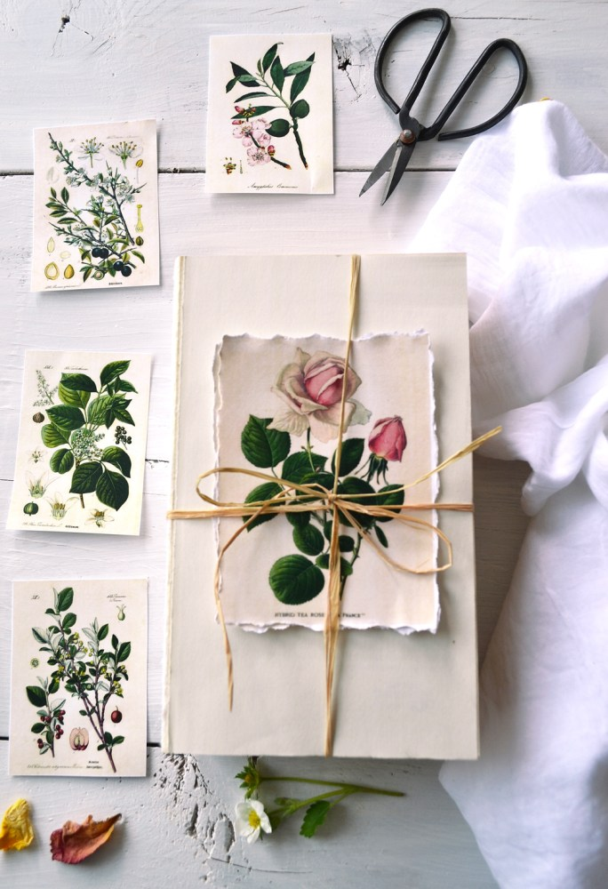 Free Botanical Thank You Card Downloads | Herbal Academy | Happy Herbalist Day! We have compiled a list of free resources to help you make this Herbalist Day (April 17th) special for the herbalists in your life!