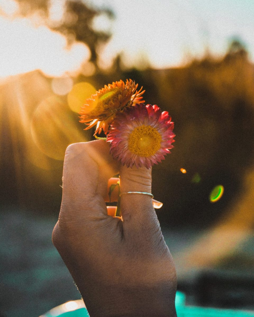 10 Simple Vitalist Practices To Support Well-Being | Herbal Academy | The main tenant of Vitalist herbalism is to remove obstacles to wellness. Here are 10 simple Vitalist practices that can positively impact one's well-being.
