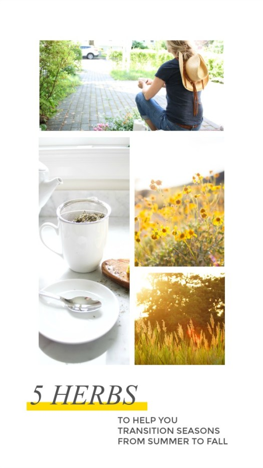 5 Herbs To Help You Transition Seasons From Summer To Fall | Herbal Academy | Make the transition from summer to fall a bit easier with the help of the following five herbs.