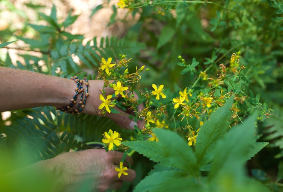Introductory Herbal Course by Herbal Academy – foraging