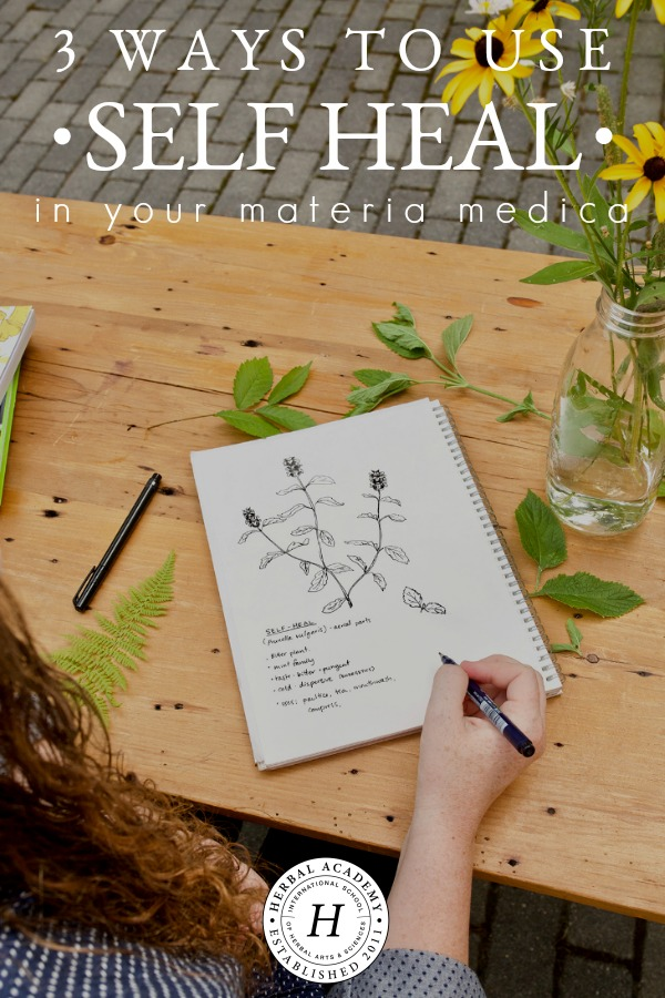 3 Ways To Use Self Heal In Your Materia Medica | Herbal Academy | Self heal is an herb who's many wellness-supporting virtues have been forgotten. Here are 3 ways to add this traditional herb back into your materia medica.