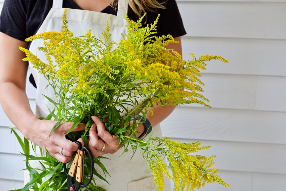 3 Late-Summer Herbs and How to Use Them | Herbal Academy | Let's take a look at three lesser-known late-summer herbs that bloom towards the end of the summer and provide benefits as the season comes to a close.