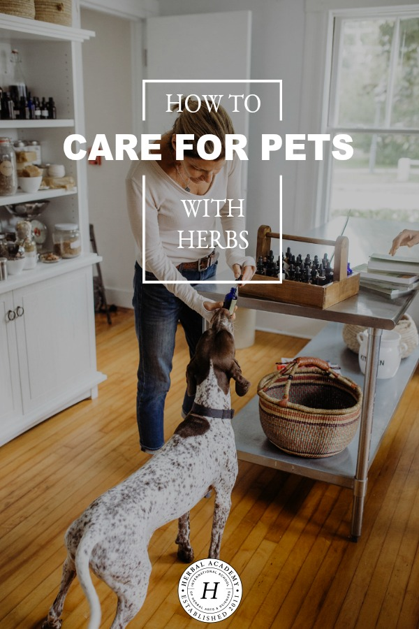 How To Use Herbs to Care for Pets | Herbal Academy | Learn about our newest Herbarium intensive, Herbs for Animals, and start using herbs to care for pets naturally!