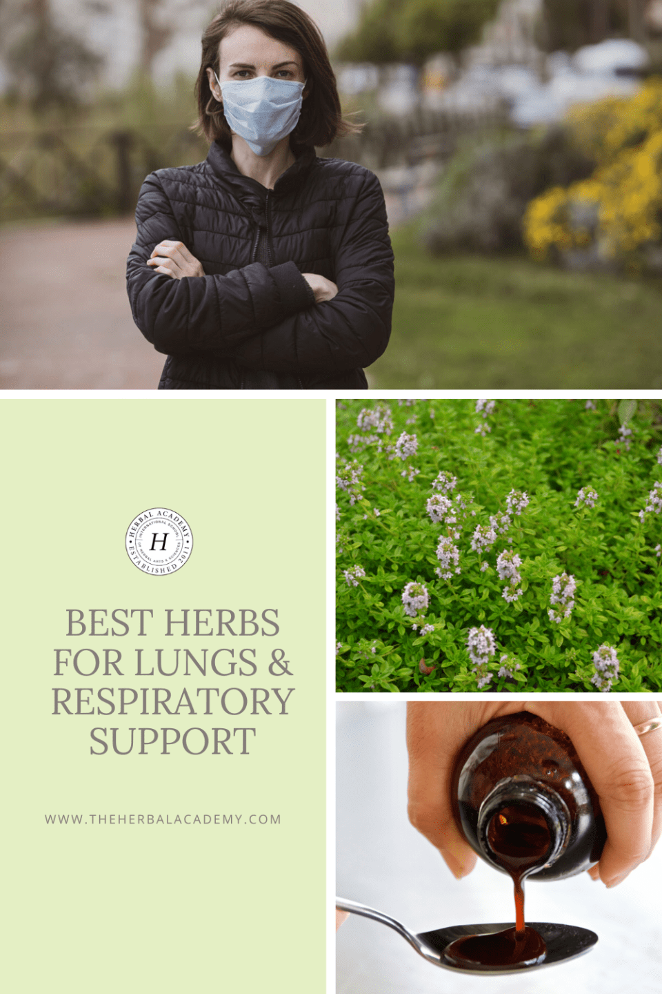 Best Herbs for Lungs and Respiratory Support | The Herbal Academy | For viral respiratory infections, turn to herbs that have strong immune or antiviral actions in addition to herbs for lungs and basic respiratory support.