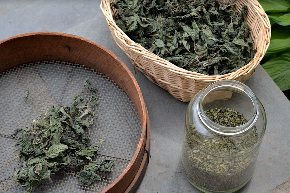 7 Reasons to Forage Wild Food and Herbs | The Herbal Academy | Foraging is a way to re-learn that nature provides an abundance of wild food and herbs that can be consumed for sustenance or wellness—or both!