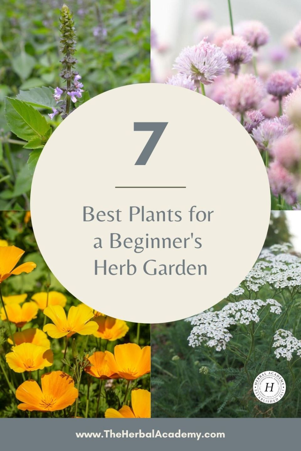 7 Best Plants for a Beginner's Herb Garden | Herbal Academy | In this article, we share seven easy-to-grow and useful herbs for a beginner's herb garden, along with tips for using and growing each one.