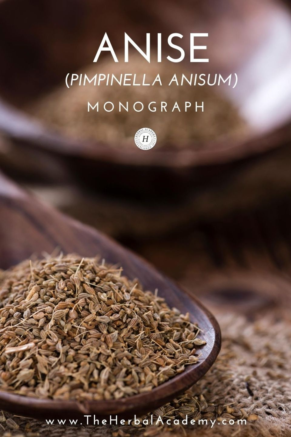 Anise Monograph: Pimpinella Anisum | Herbal Academy | In this anise monograph, you'll learn the history of this fascinating plant along with botanical descriptions and modern uses.