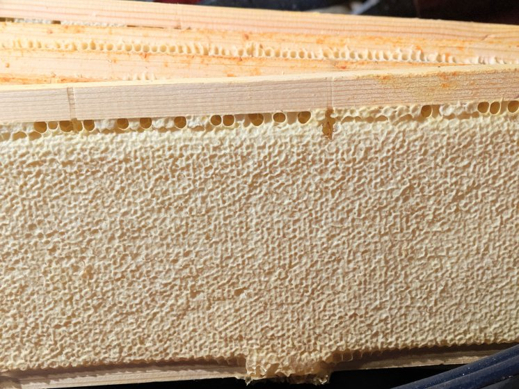 a frame of honey capped with natural beeswax straight from the hive inside the beehive of a beekeeper