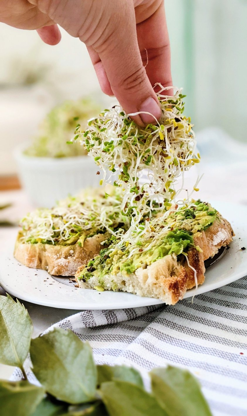 sprouts for breakfast recipe with alfalfa sprouts meal ideas ways to eat sprouts for breakfast brunch or a light lunch recipes with alfalfa sprouts avocado toast with sprouts