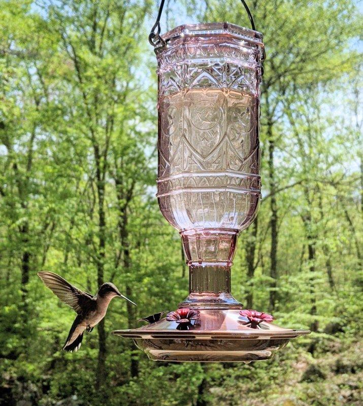 easy diy hummingbird feeder fluid mix recipe all natural bird sugar solution without red dye make hummingbird food last longer from a beekeeper